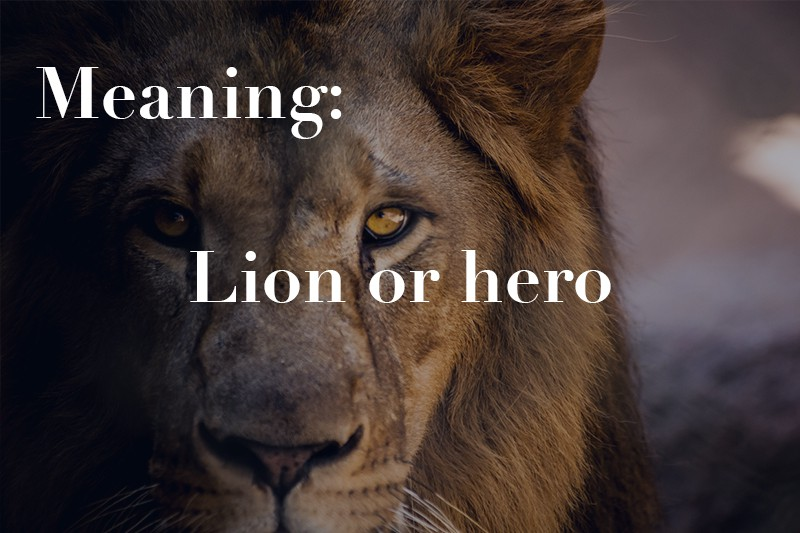 lion or hero