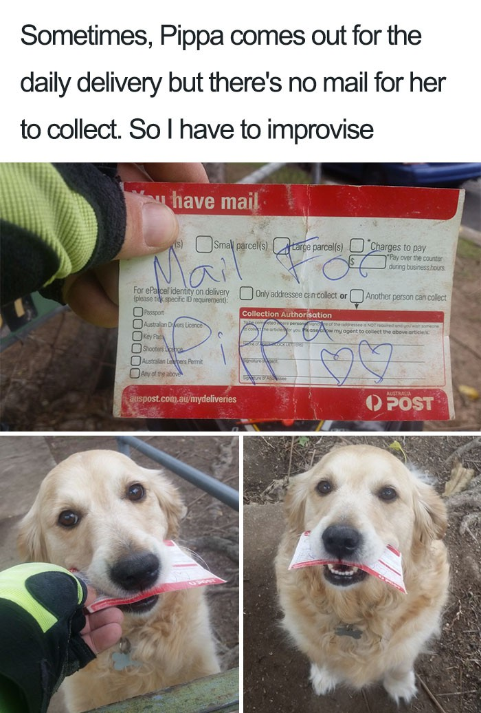Mail for dog