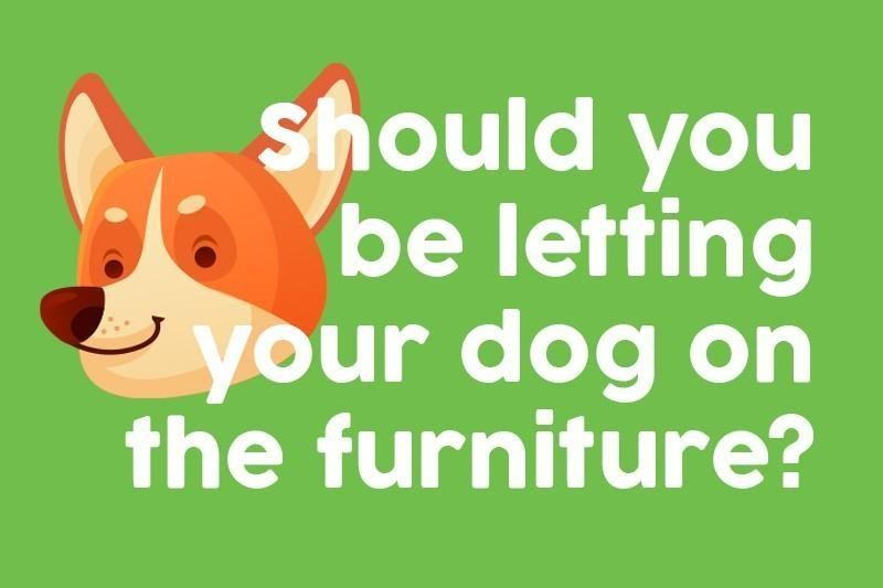 Should you be letting your dog on the furniture?