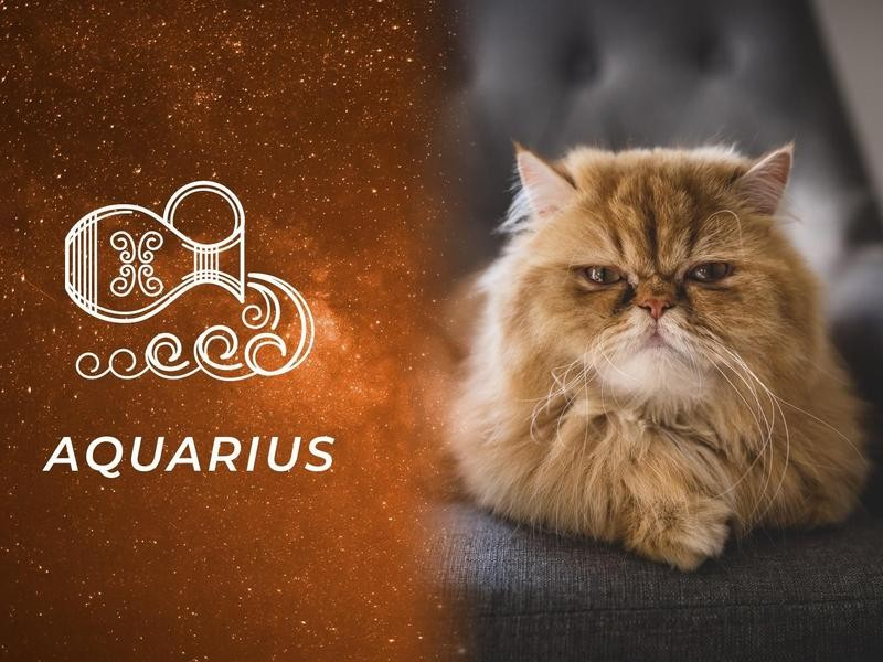 Aquarius: Persian