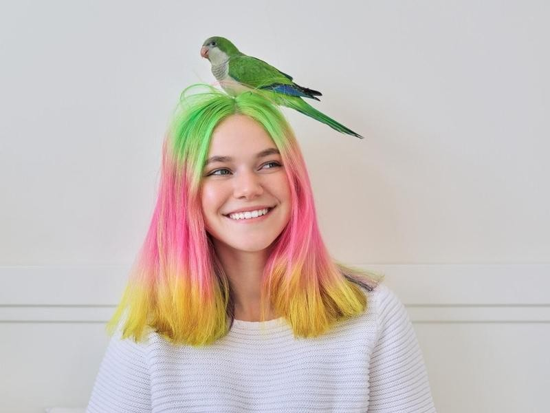 Quaker parrot on a person's head