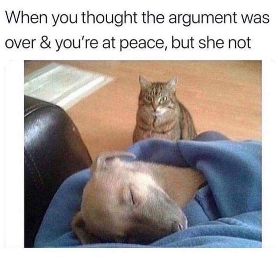 Cat looking at a sleeping dog