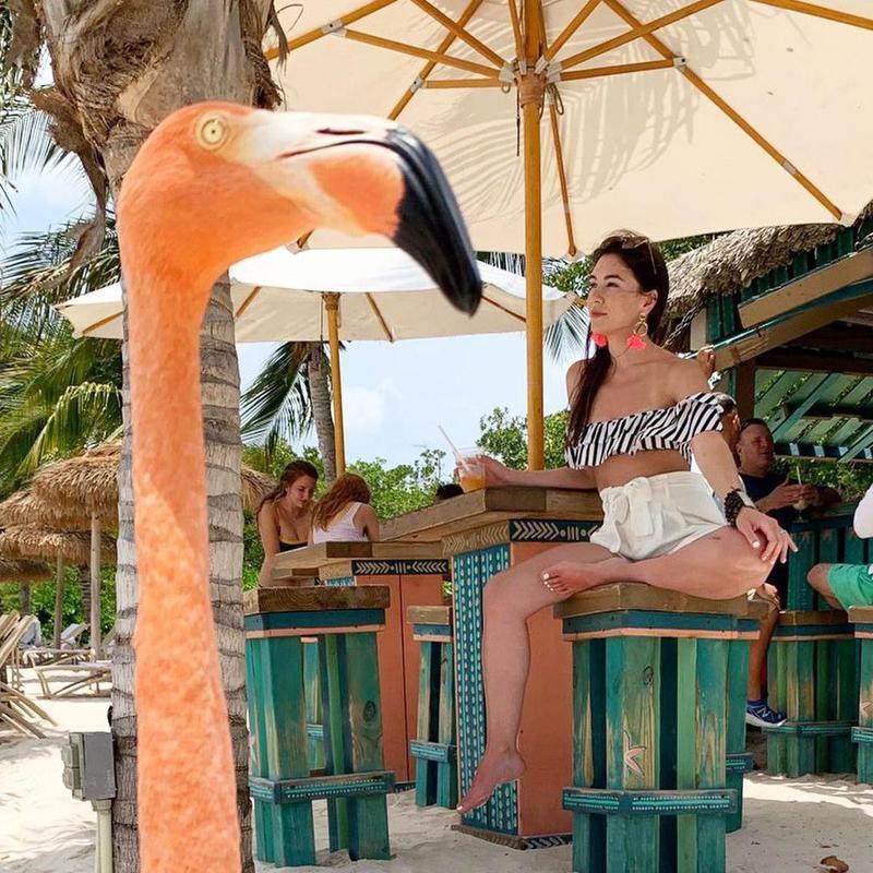 Funny flamingo photobomb