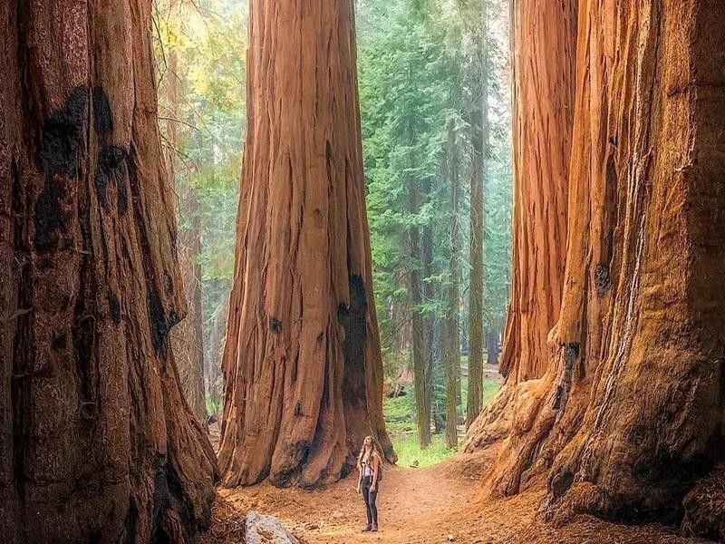 Woman at Sequoia National Park
