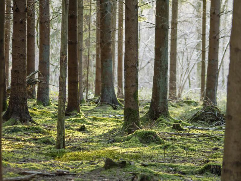 Forest of Ardennes