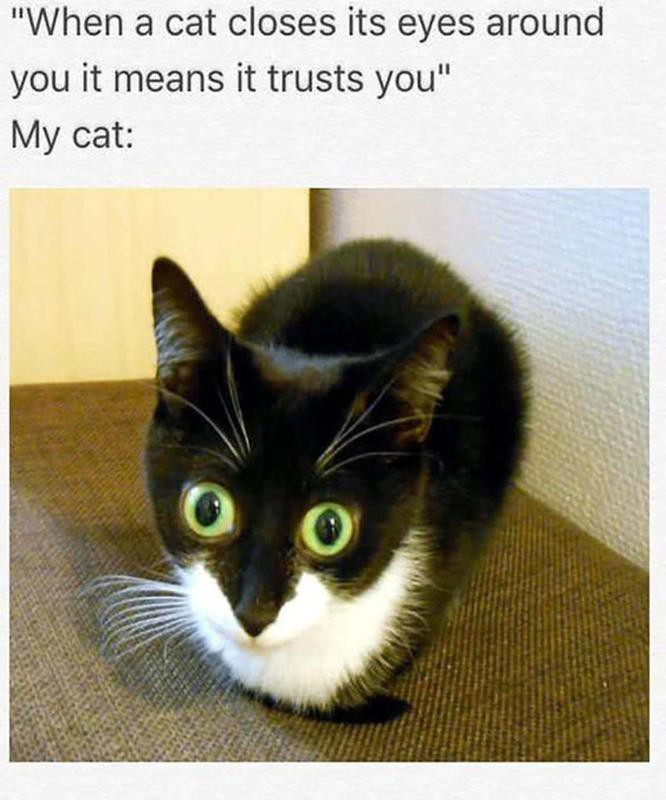 Cat opening eyes wide
