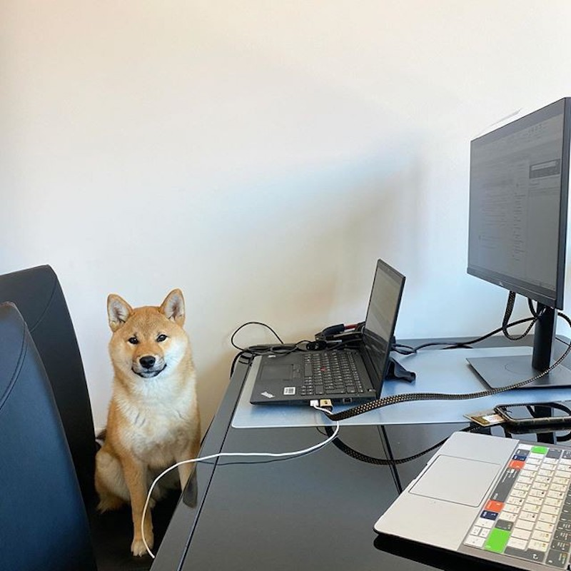 Dog working at a work station