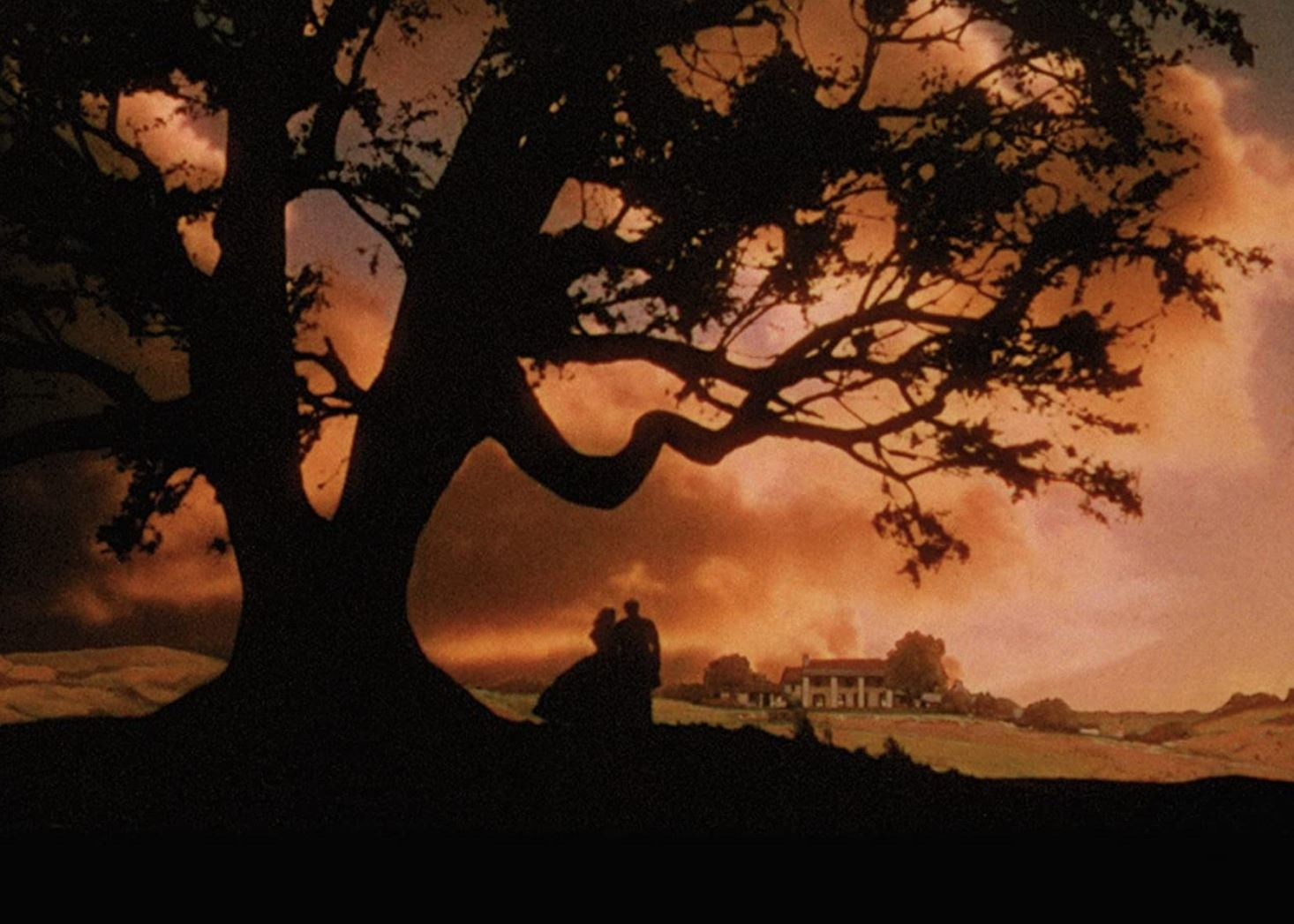 Gone with the Wind tree