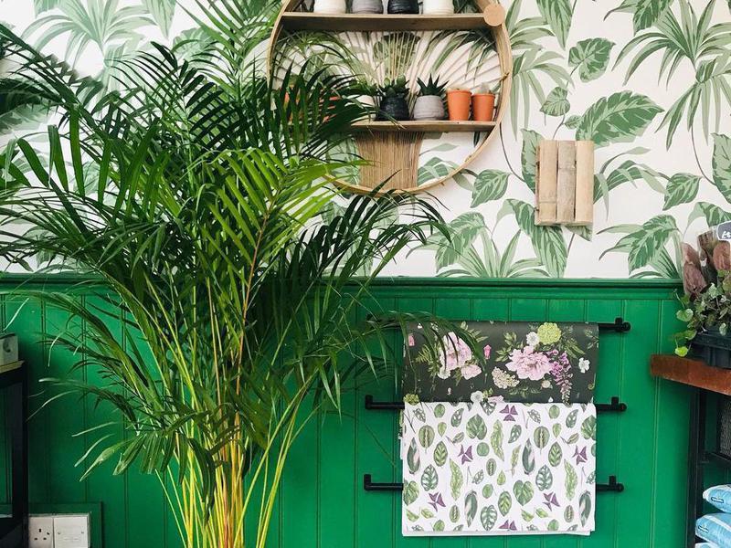 Large areca palm plant