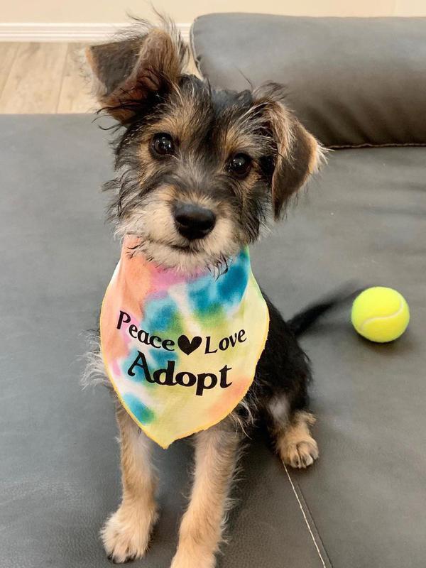 small dog with bandana