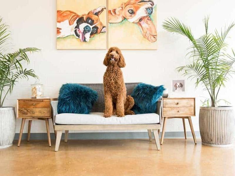 hounds lounge