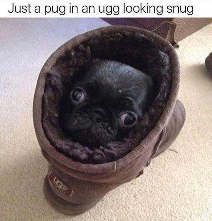 Snug doggy