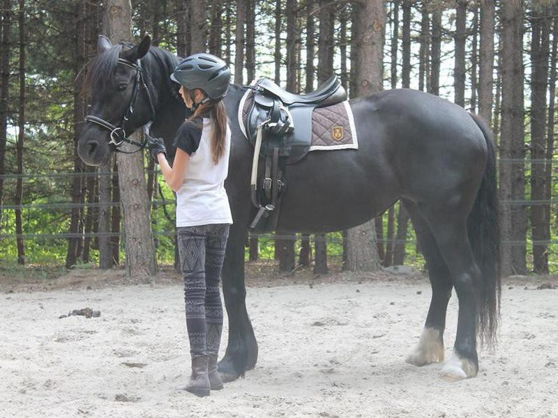 Girl and Canadian Horse