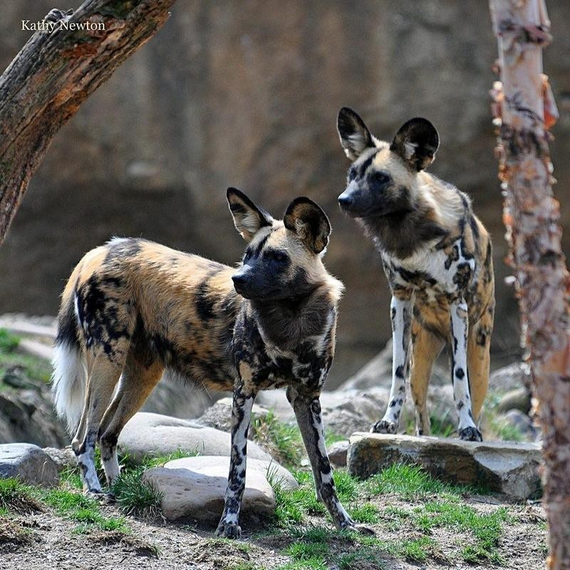 Painted Dog Valley