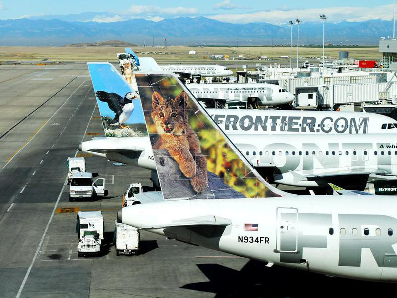 Frontier Airlines wildlife logo on airplanes