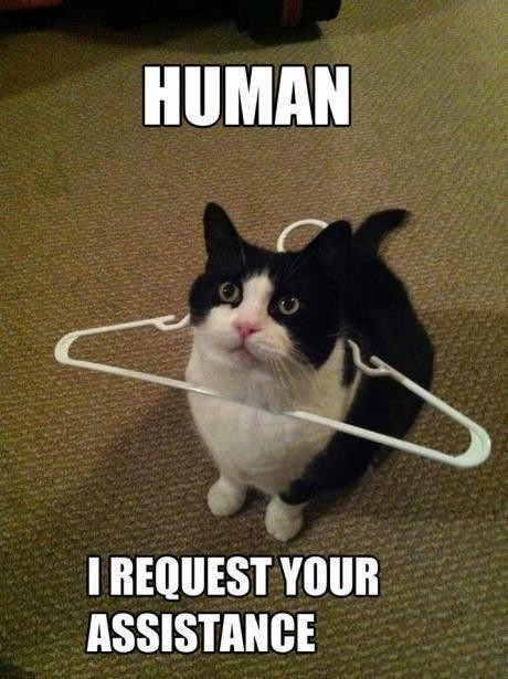 Cat stuck in a clothes hanger