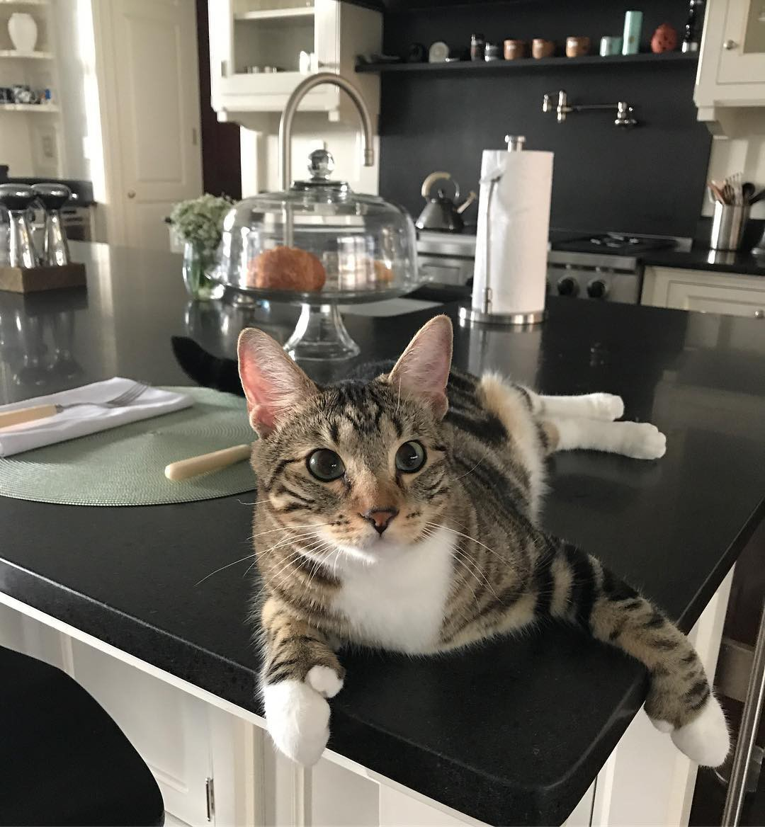 Jerry Seinfeld's cat