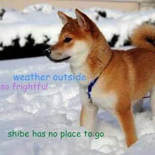 Doge dog in the dnow