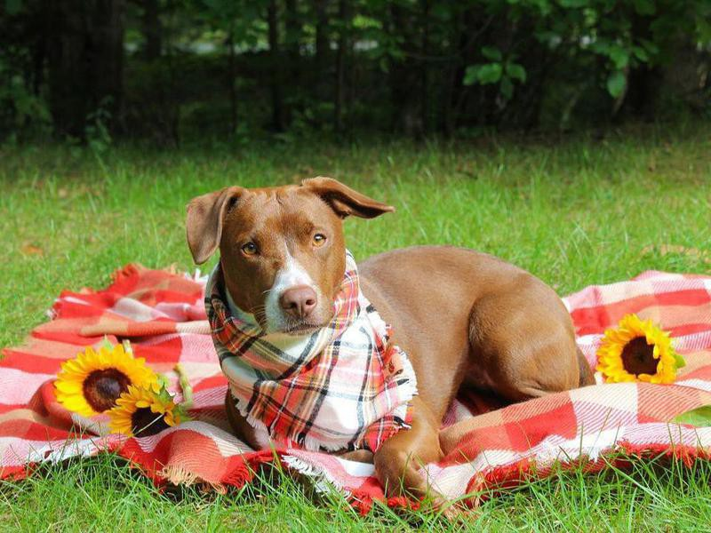 dog sitting on picnic blanket