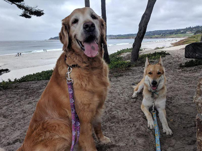 Dogs at dog friendly beach