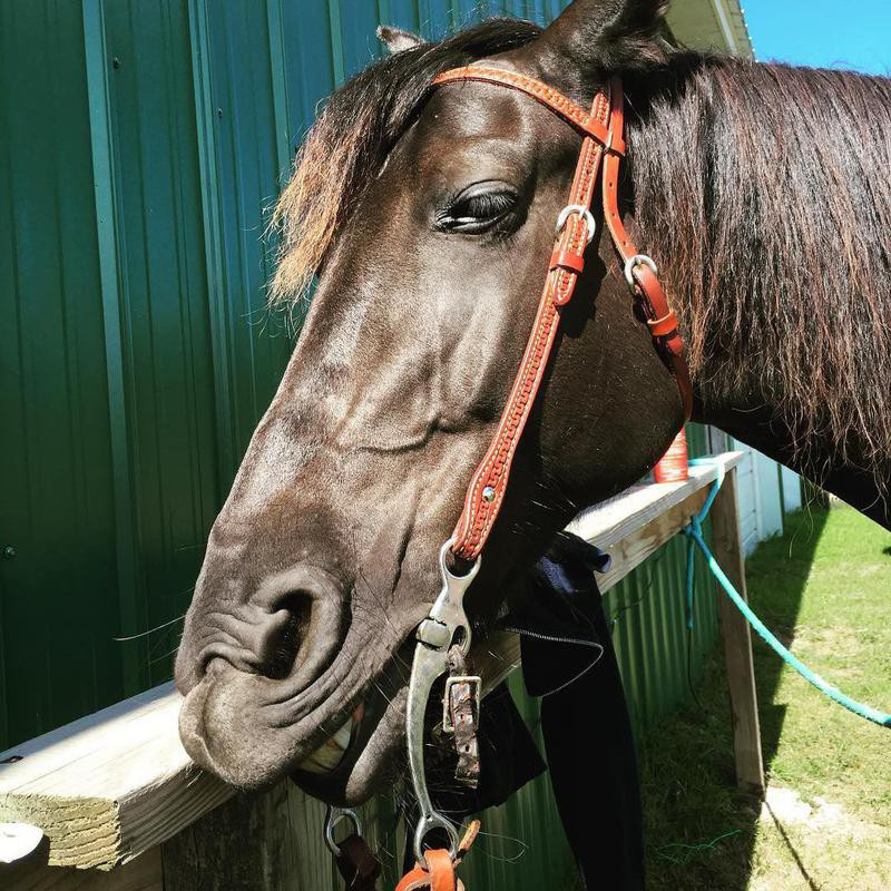 Black Horse Smiling
