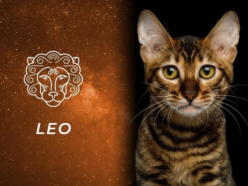 Leo: Toyger