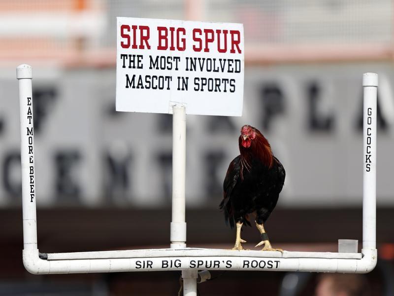 Sir Big Spur