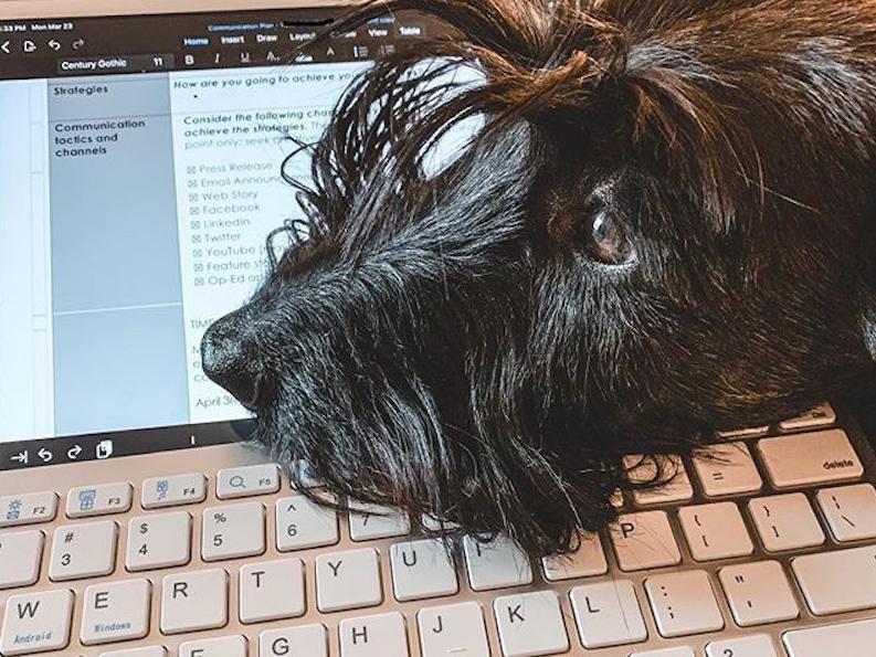 Dog on a keyboard