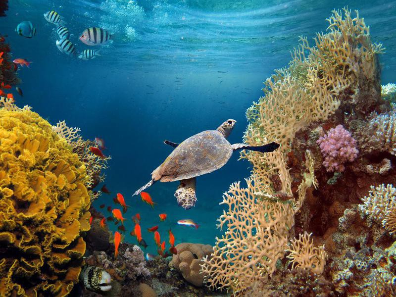 Bottom Line: Coral Reefs