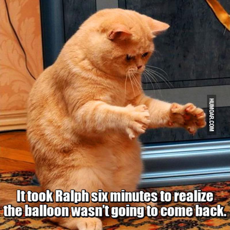 Cat wants a balloon