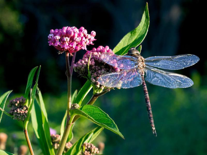 Dragonfly on colorful plant