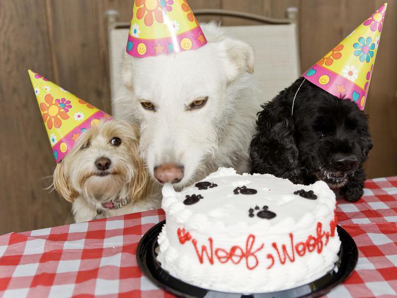 Dog Birthday Party Eating Cake