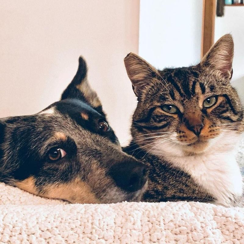 Cat and dog posing for camera