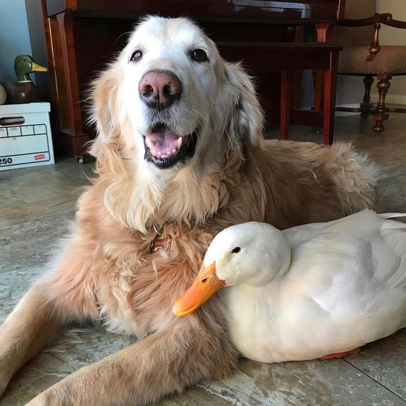 Dog and goose
