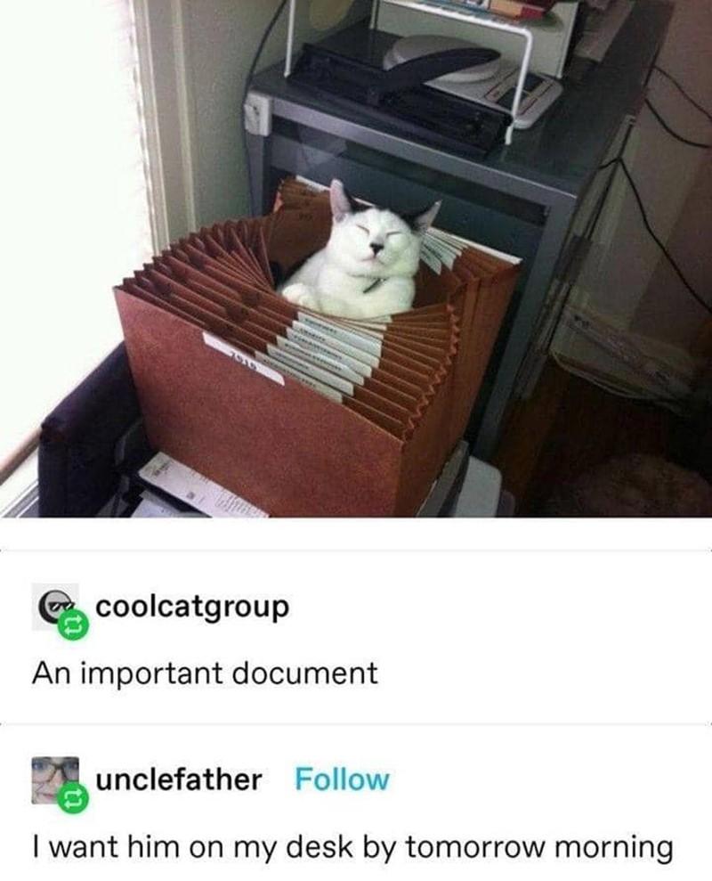 cat in filing cabinet