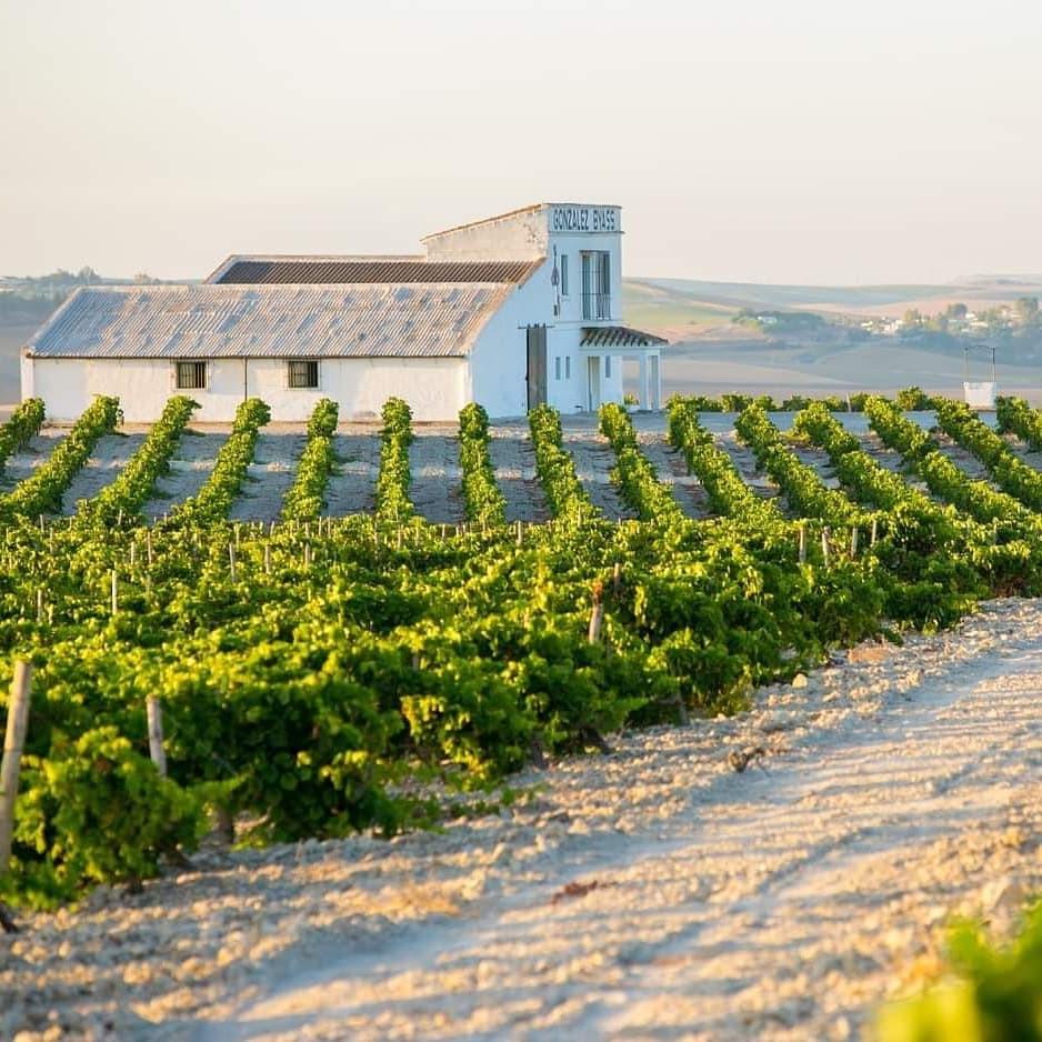 Gonzalez-Byass vineyard