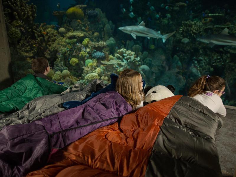Shark Sleepover
