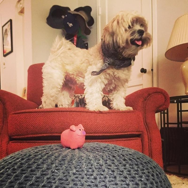 Dog and toy pig