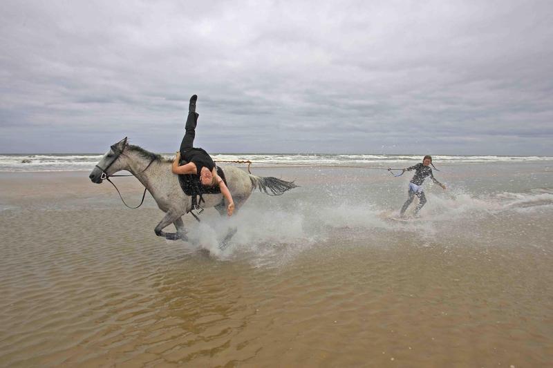 horse surfing