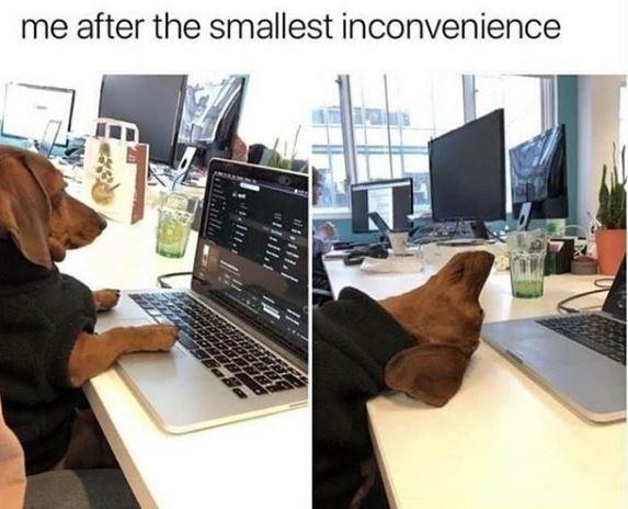 Working dog vs. defeated dog