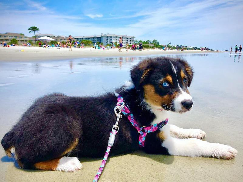 pet-friendly beach towns for your dog