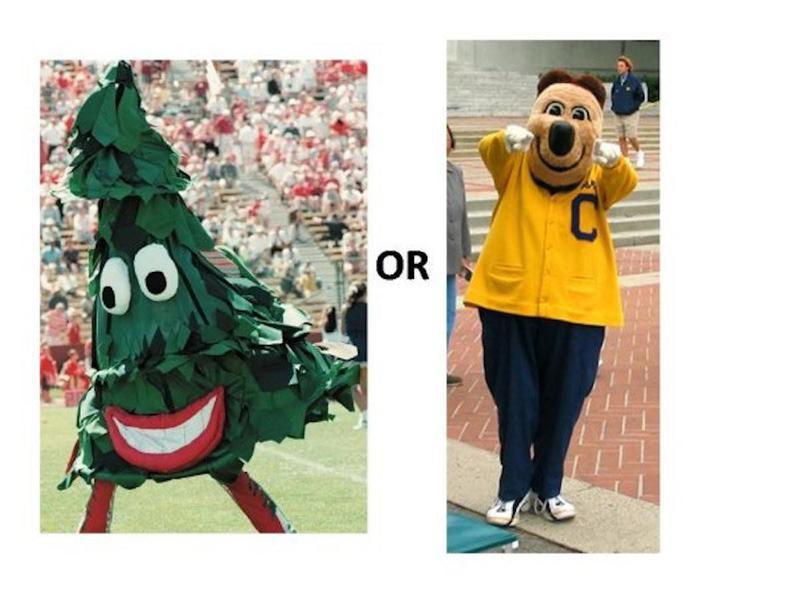 The Tree vs. Oski