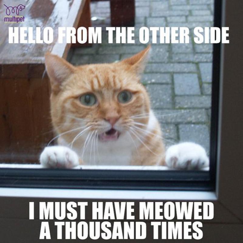 Cat stuck outside a window