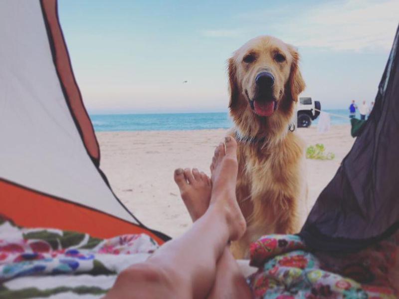 Happy dog on the sand