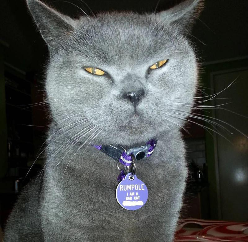 Funny bad cat