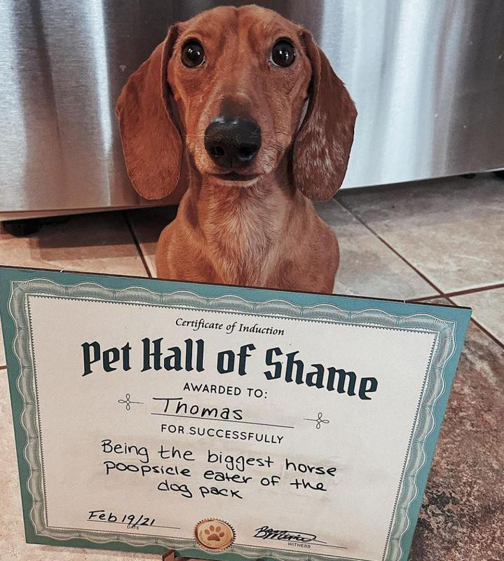 Dachshund in the Pet Hall of Shame