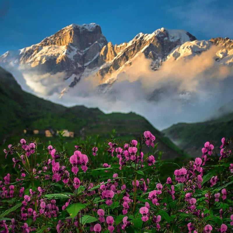 Valley of the Flowers National Park in India