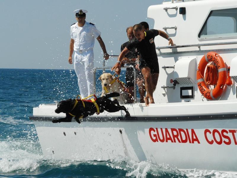 Italian Coast Guard Dogs