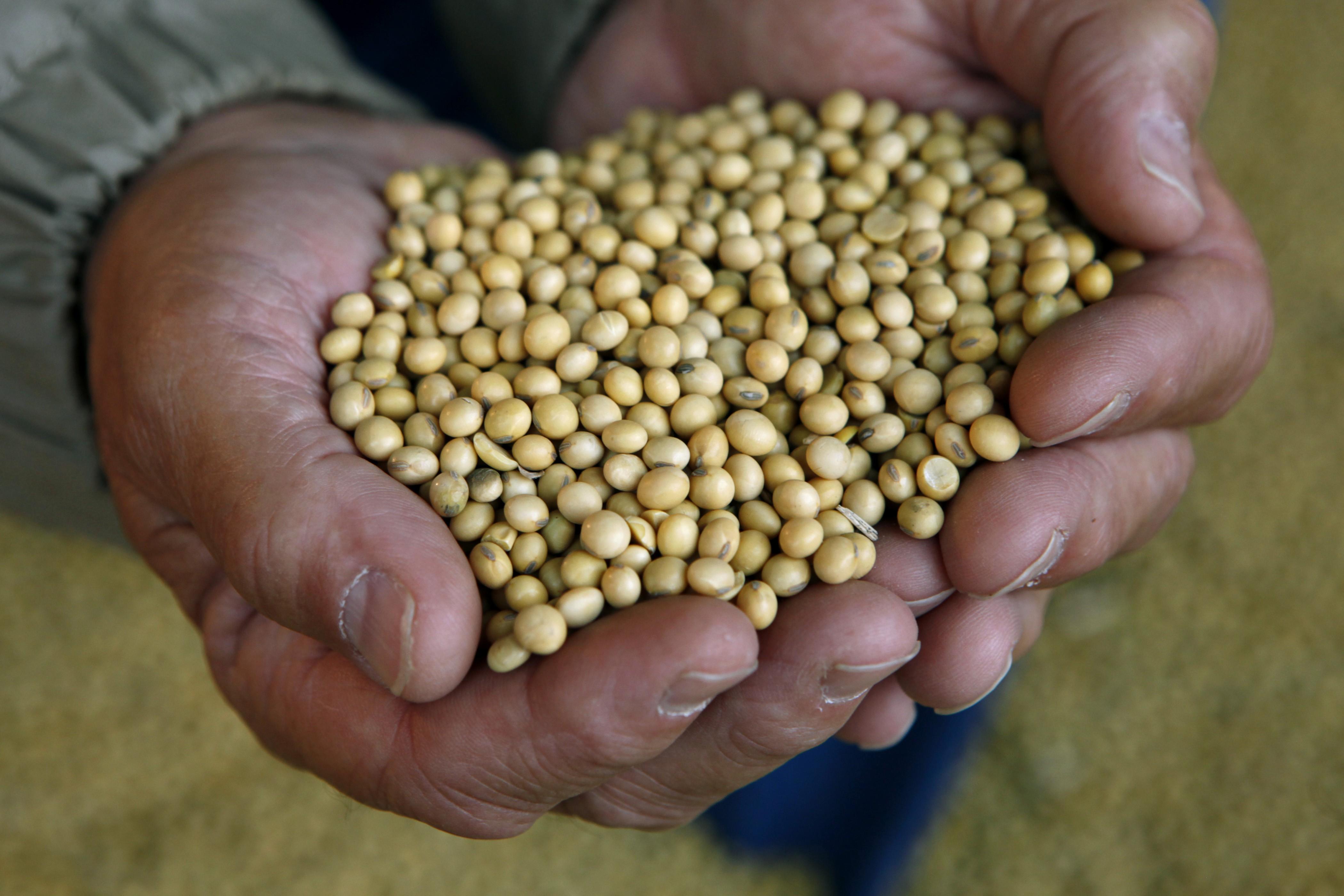 Soybeans in Iowa