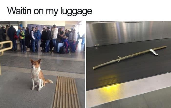 Traveling dog at the airport